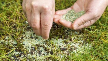 Replanting-New-Grass-Seed-700x466